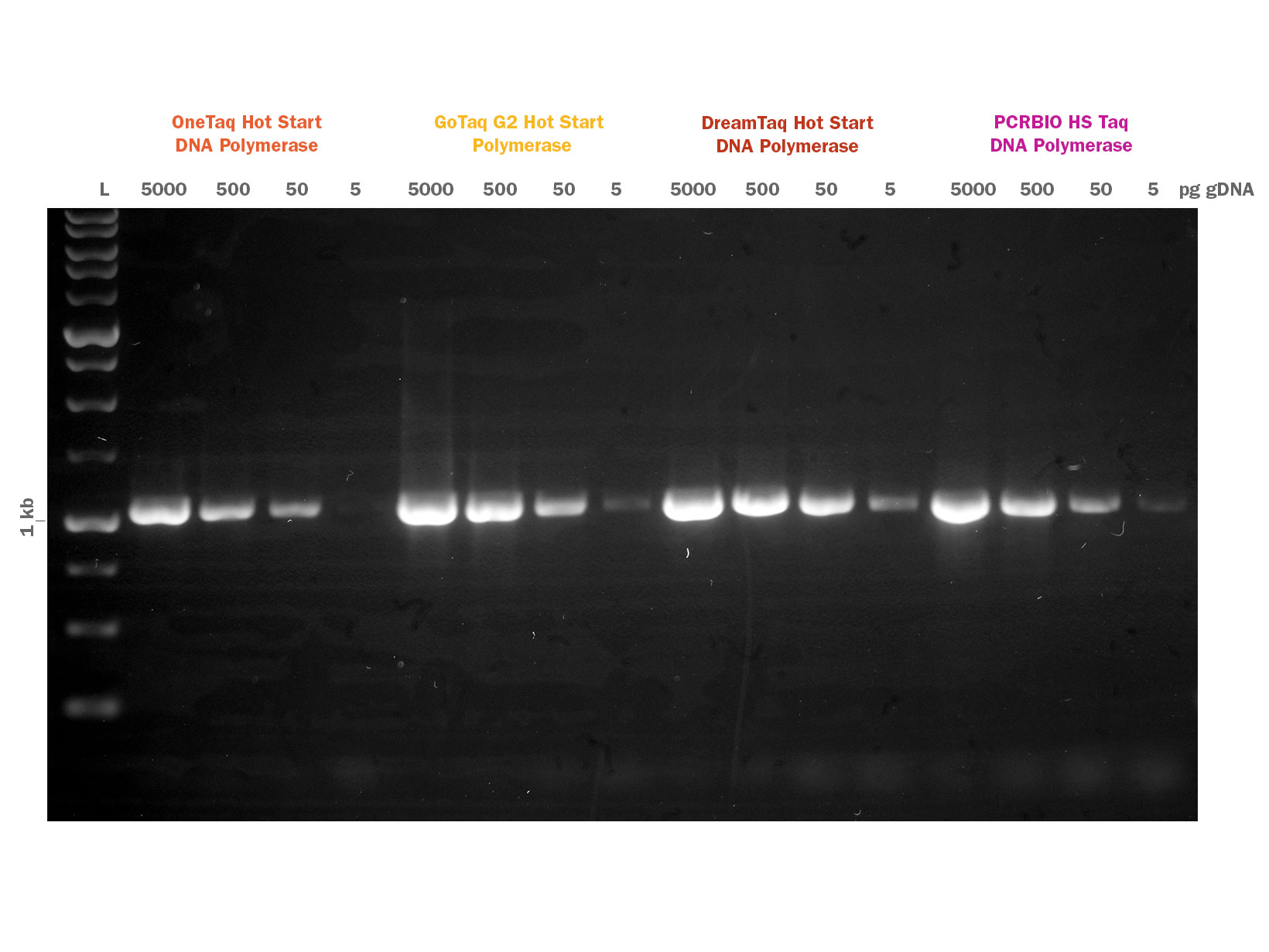 Gel image showing PCRBIO HS Taq DNA polymerase competitor comparison