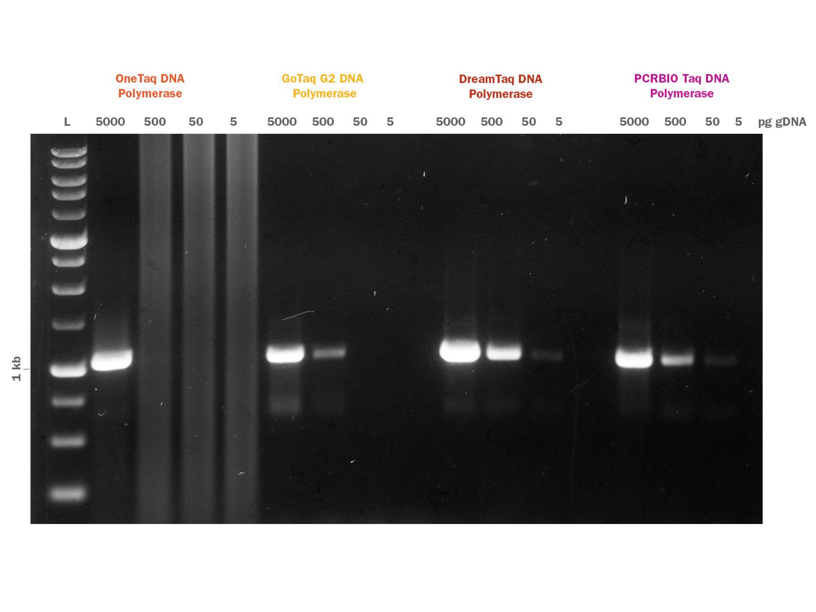 PCRBIO Taq DNA Polymerase Competitor Comparison Gel Image