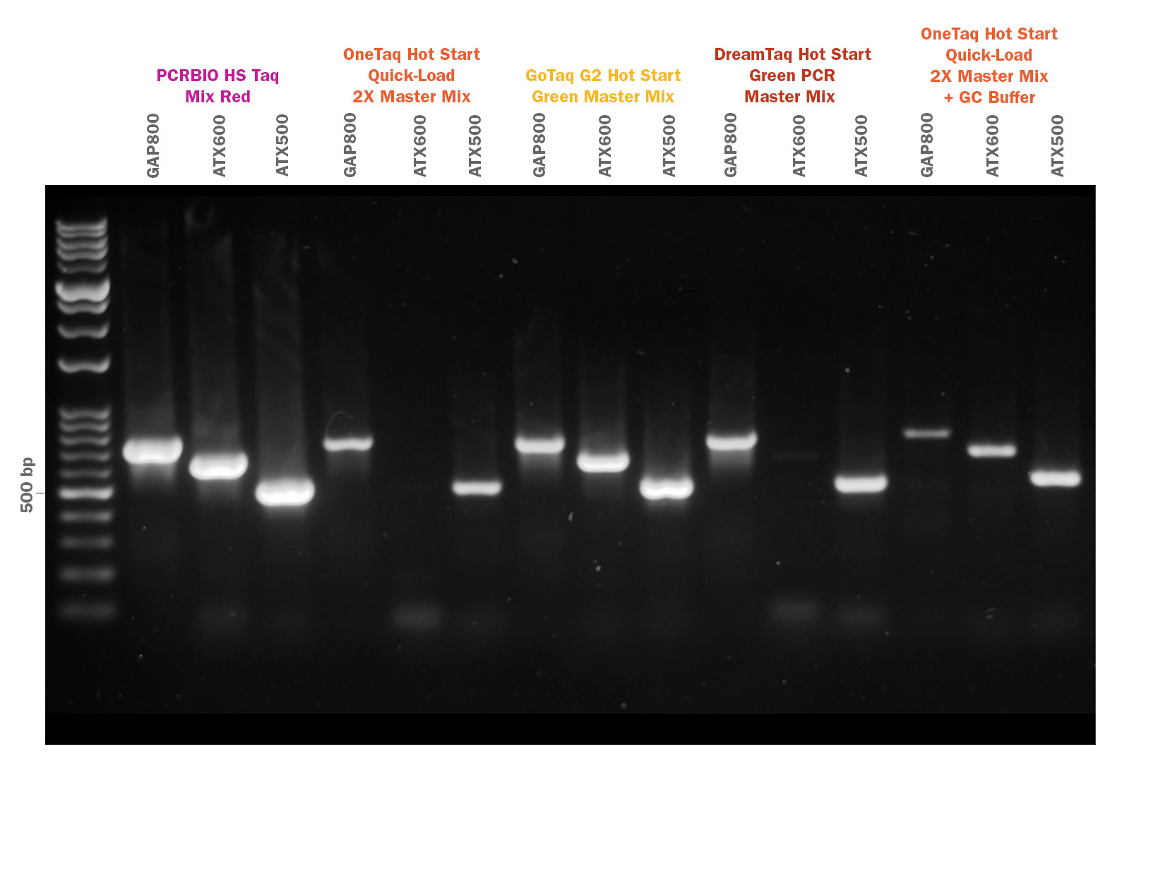 Gel image showing PCRBIO HS Taq Mix Red competitor comparison of GC rich amplification