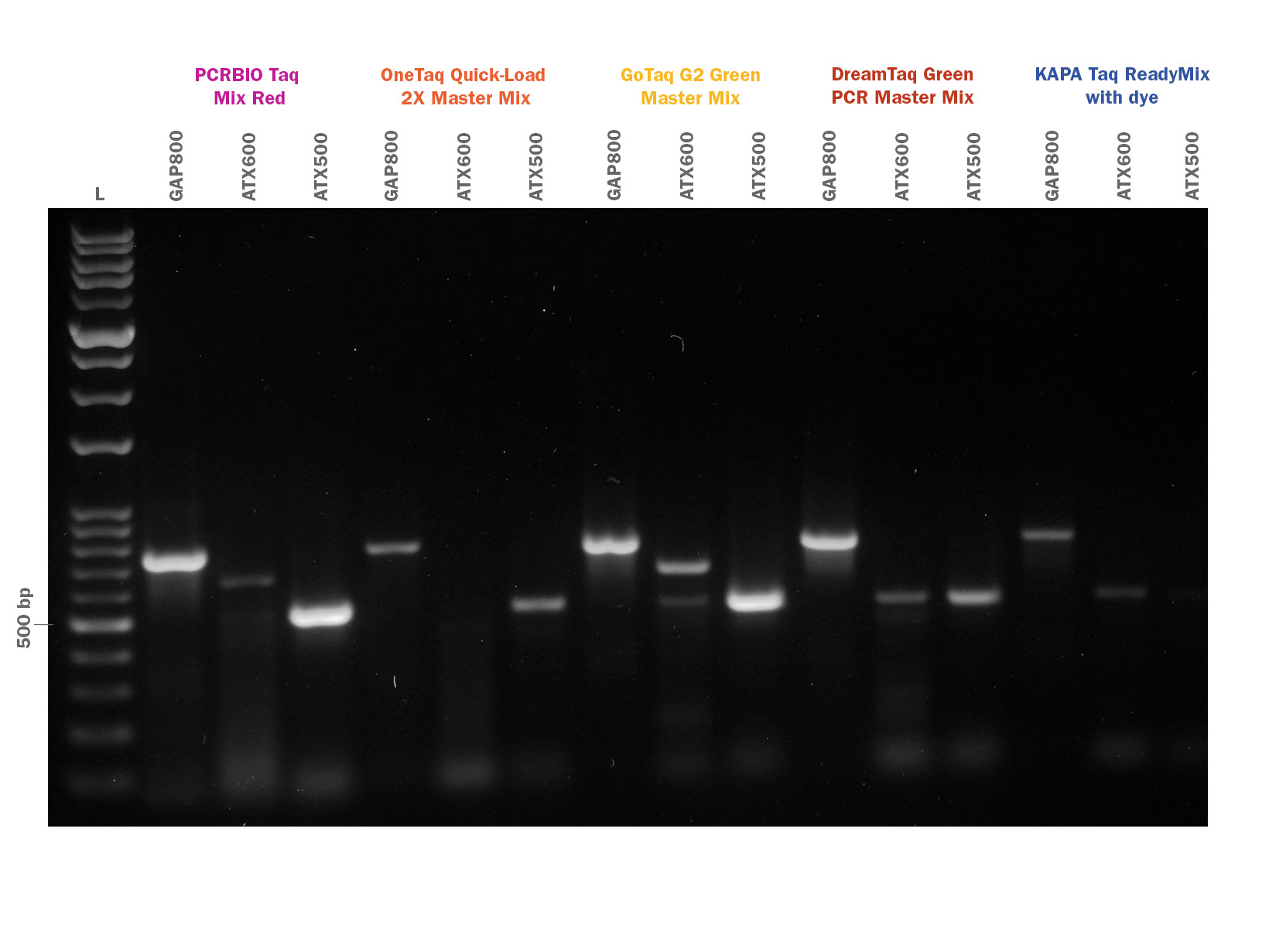 Gel image showing PCRBIO Taq Mix Red competitor comparison of GC rich amplification