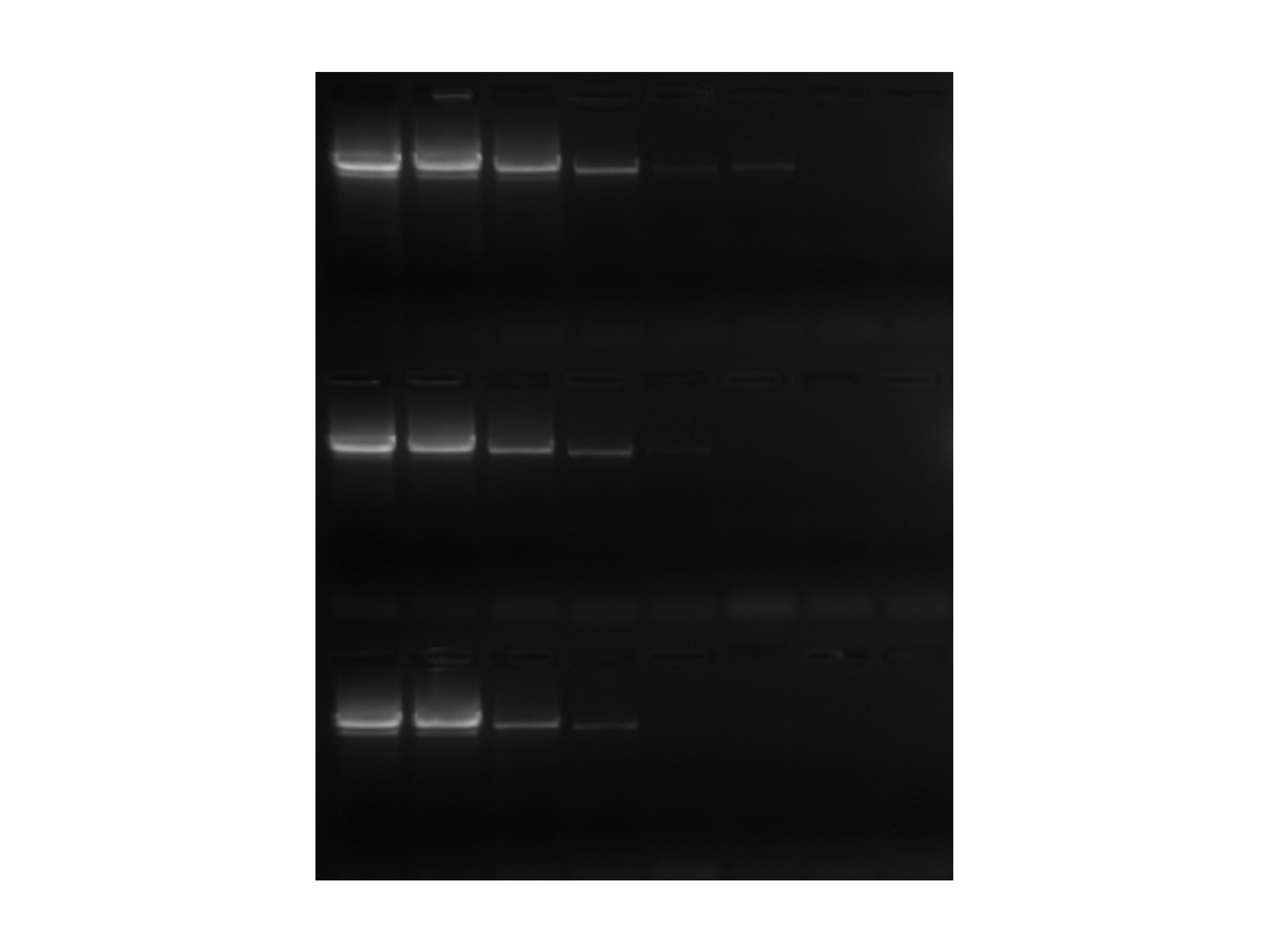 Image of endpoint gel comparing PCRBIO HS Taq DNA Polymerase against Kapa Biosystems and Invitrogen
