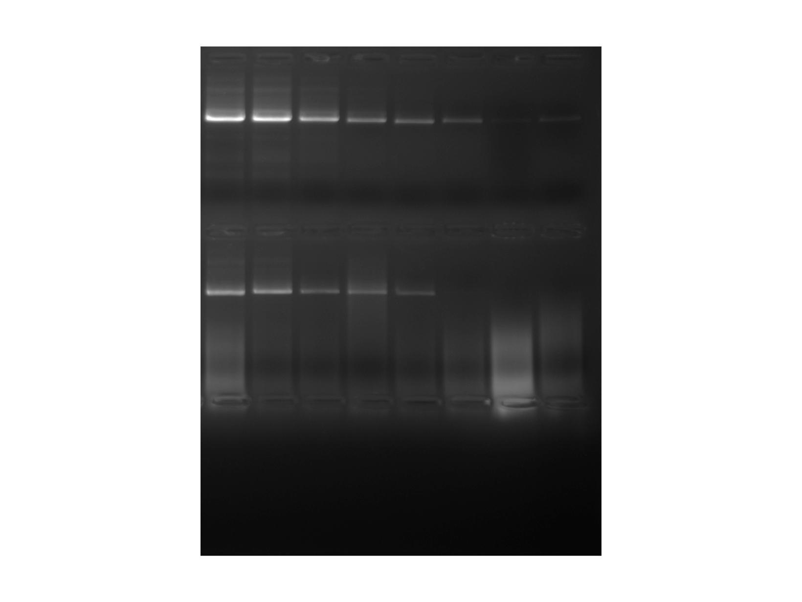 PCRBIO HiFi Polymerase competitor comparison gel image