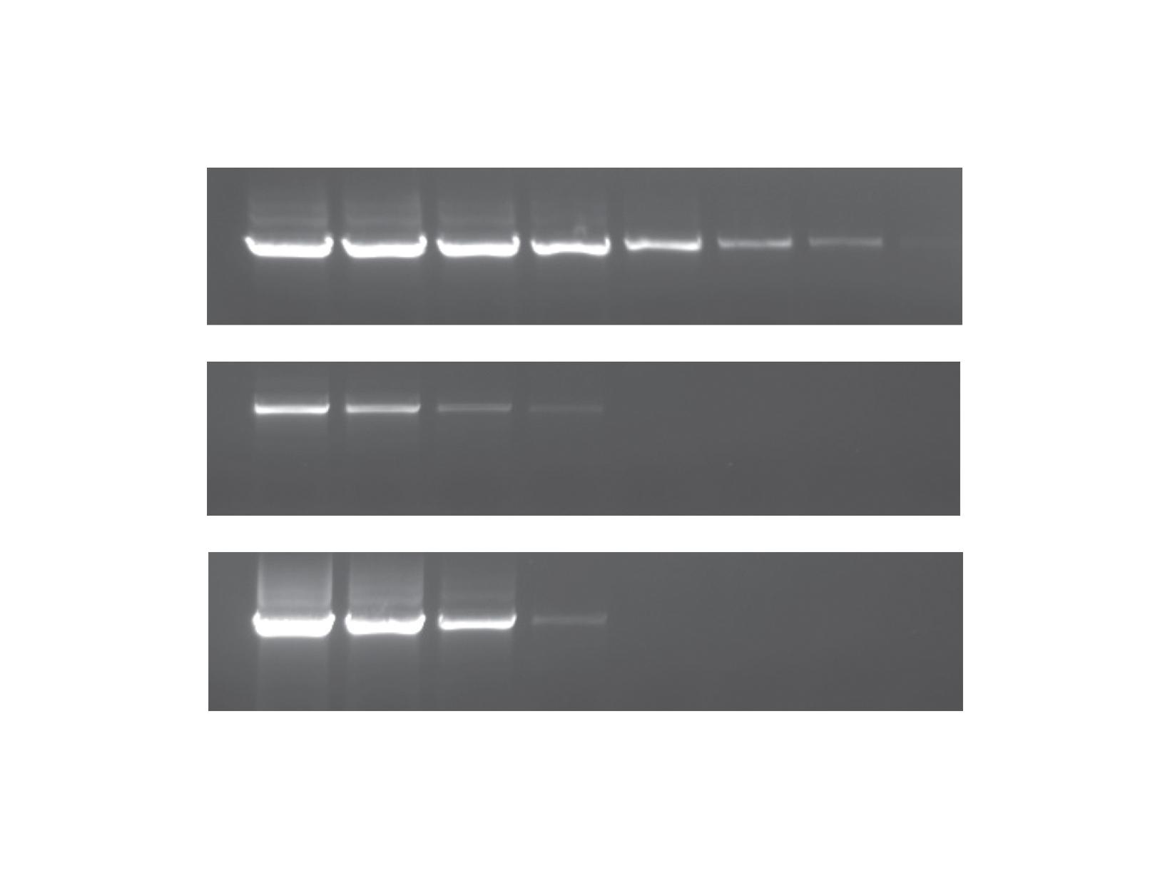 PCRBIO Taq DNA Polymerase competitor comparison gel image