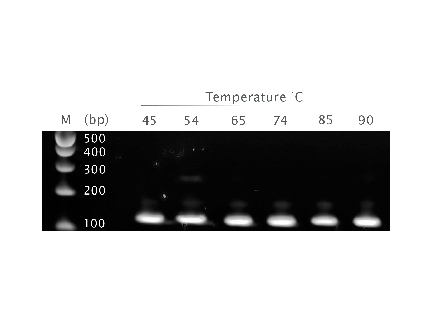 Endpoint gel picture showing UltraScript 2.0 giving a similar amounts of product across a wide range of temperatures, up to 90 degrees.