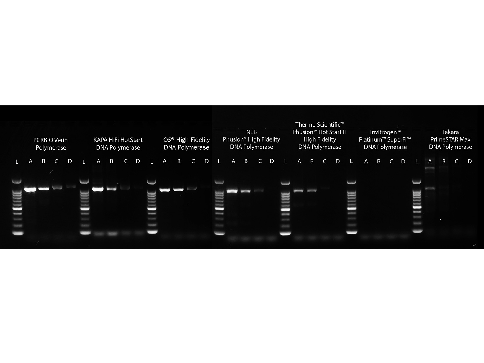 Gel image comparing the sensitivity of PCRBIO VeriFi Polymerase compared to leading competitors